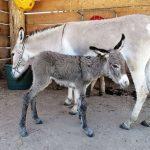 82 Prozent der Deutschen von Zoos überzeugt - Forsa-Studie dokumentiert hohe Beliebtheit