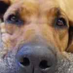 Ein Haustier anschaffen muss gut überlegt sein: Tiere sind auch Lebewesen!