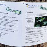 """Kreativ im Wald - Kreisforstamt bietet """"Waldpädagogik zum Mitnehmen"""" an"""