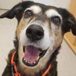 Rechtliche Fragen bei Tierheim-Tieren - Darf Hunde-Oma Sarah vermittelt werden?