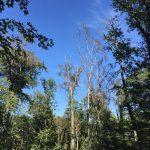 Kreisforstamt: Einschlag absterbender Bäume in den Gemeindewäldern