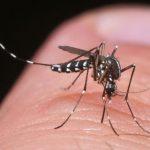 Juckt mich nicht? Sollte aber! Tigermücken richtig erkennen und melden