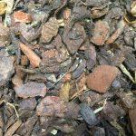 Vorgärten ohne Schotter, dafür mit Insekten-freundlichem Rindenmulch