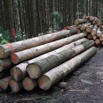 """Neue Vorschrift """"Nachhaltige Waldwirtschaft"""" und Fördermöglichkeiten"""