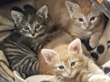 Nach 12 Wochen Aufzucht von Katzen-Drillingen: Liebe heißt Loslassen