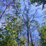 Dünenkamm: Ein Problemgebiet für den Wald - Sand speichert kaum Wasser