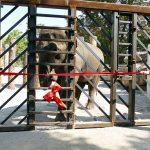 Trainingswand für Elefanten im Zoo eröffnet - Kooperation WWF und Zoo wird fortgeführt.