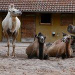 Frühe und späte Zoo-Sonderführungen für Nachteulen und Frühaufsteher