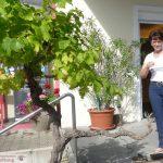 Badischer Weinradweg- Basel bis Weinheim - Akkus aufladen im Weingut Müller