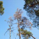 Das Kreisforstamt informiert: Bäume reagieren auf Sommerhitze und Trockenheit