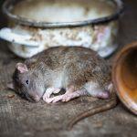 Von der Pest zu Corona: Seuchen im Rhein-Neckar-Kreis über die Jahrhunderte