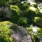 Kühlendes Waldklima – Moose als wichtige Waldpflanze
