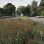 """""""Goldene Wildbiene"""" für insektenfreundlich gestaltete Verkehrsinseln"""