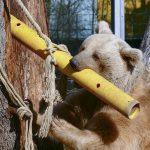Workshop Enrichment: Kisten, Röhren, frische Äste zur Tierbeschäftigung im Zoo