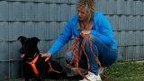 Angsthund Rica ist jetzt ein Jahr Tierheim – Fortschritte sind erkennbar – Weg noch weit