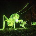 """""""Licht an!""""  beim Heidelberger Zoo-Leuchten ab 1. Oktober"""