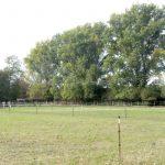 Pappeln im Bereich der Weidhöfe zw. Leimen und St. Ilgen müssen gefällt werden