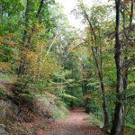 Kreisforstamt informiert: Wald bietet vielfältige Möglichkeiten zum Erholen
