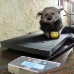 Sparkasse Heidelberg unterstützt Artenschutz und Artenvielfalt – Spende an den Zoo