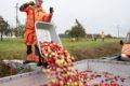 Straßenmeisterei erntet Obst zur Erhaltung des Baumbestands