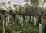 Waldbegehung des Gemeinderates: </br>Kiefern und Buchen leiden am stärksten