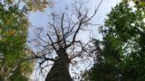 """KlimalisteBW – Online-Veranstaltung """"Waldwende oder Waldende"""""""