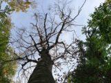 46 Prozent der Wälder Baden-Württembergs sind deutlich geschädigt