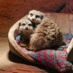 Eine Wunschliste für den Zoo - Den Tieren zum Fest eine Freude machen