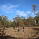 Sandhausen unterstützt Baumpflanz-Aktion und pflanzt 5600 Setzlinge im Gemeindewald