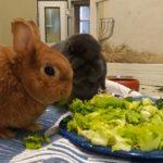 """Des Schicksals seltsame Wege - """"Bunny"""" und """"Schlappi"""" trafen sich im Tierheim"""