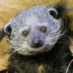 Ein Stück Zoo für Zuhause - Tierpatenschaften, Zoo-Gutscheine oder Online-Videos