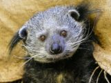 Ein Stück Zoo für Zuhause – Tierpatenschaften, Zoo-Gutscheine oder Online-Videos
