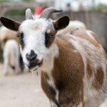 Neues Domizil für Schweine, Rinder, Ziegen & Co. im Zoo nimmt Form an
