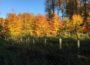 Kreisforstamt: Es werden 39.000 Bäumchen von 17 verschiedenen Baumarten gepflanzt