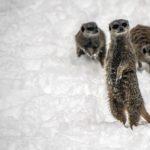 Heiligabend mit dem Zoodirektor Online: Dr. Wünnemann liest Zoogeschichten