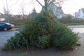 Ärgernis Weihnachtsbaum-Entsorgung – Fasanerie bevorzugtes Auswilderungsgebiet