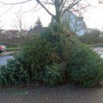 Ärgernis Weihnachtsbaum-Entsorgung - Fasanerie bevorzugtes Auswilderungsgebiet