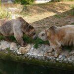 Trauriger Abschied im Januar - Syrischer Braunbär Martin im Zoo eingeschläfert