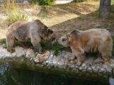Trauriger Abschied im Januar – Syrischer Braunbär Martin im Zoo eingeschläfert