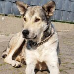 Freude im Tom-Tatze-Tierheim: Geduld zahlte sich aus bei Angsthund Lausi