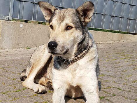 Freude im Tom-Tatze-Tierheim: </br>Geduld zahlte sich aus bei Angsthund Lausi