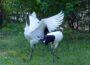 Inventur: Eins, zwei, drei, vier, viele! Genau 160 Tierarten leben im Heidelberger Zoo