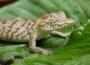 Zootier des Jahres 2021: Das Krokodil – Ein Nützlinge mit Imageproblem