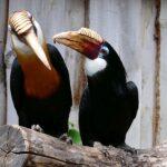 Verliebt wie Turteltauben, Hornvögel oder Kakadus - Tierpatenschaft als Valentinstag-Geschenk