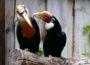 Verliebt wie Turteltauben, Hornvögel oder Kakadus – Tierpatenschaft als Valentinstag-Geschenk