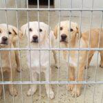 Hundewelpen im Tom-Tatze-Tierheim - </br>Vom Tierdealer in gute Obhut und Familie