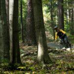 Förster sind besorgt:  Immer mehr illegale Mountainbike-Strecken im Wald