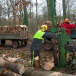 Kreisforstamt informiert:  Brennholz selber machen – Sicherheitsregeln beachten