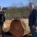Nadelwertholz-Submission:  Wertvollster Stamm kommt aus dem Stadtwald Weinheim