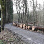 Wertvolle Hölzer aus heimischen Wäldern - Eichen- und Buntlaubholz-Submission